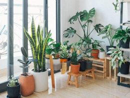 распродажа растений варшава