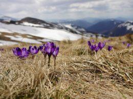 весна варшава выходные