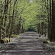 Кабацкий лес в Варшаве