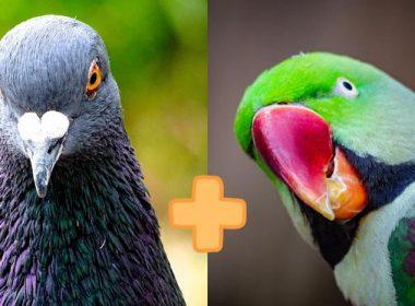 варшава птица голубь попугай