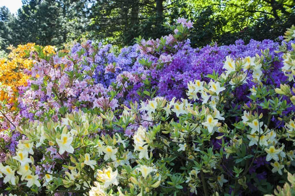 ботанический сад варшава