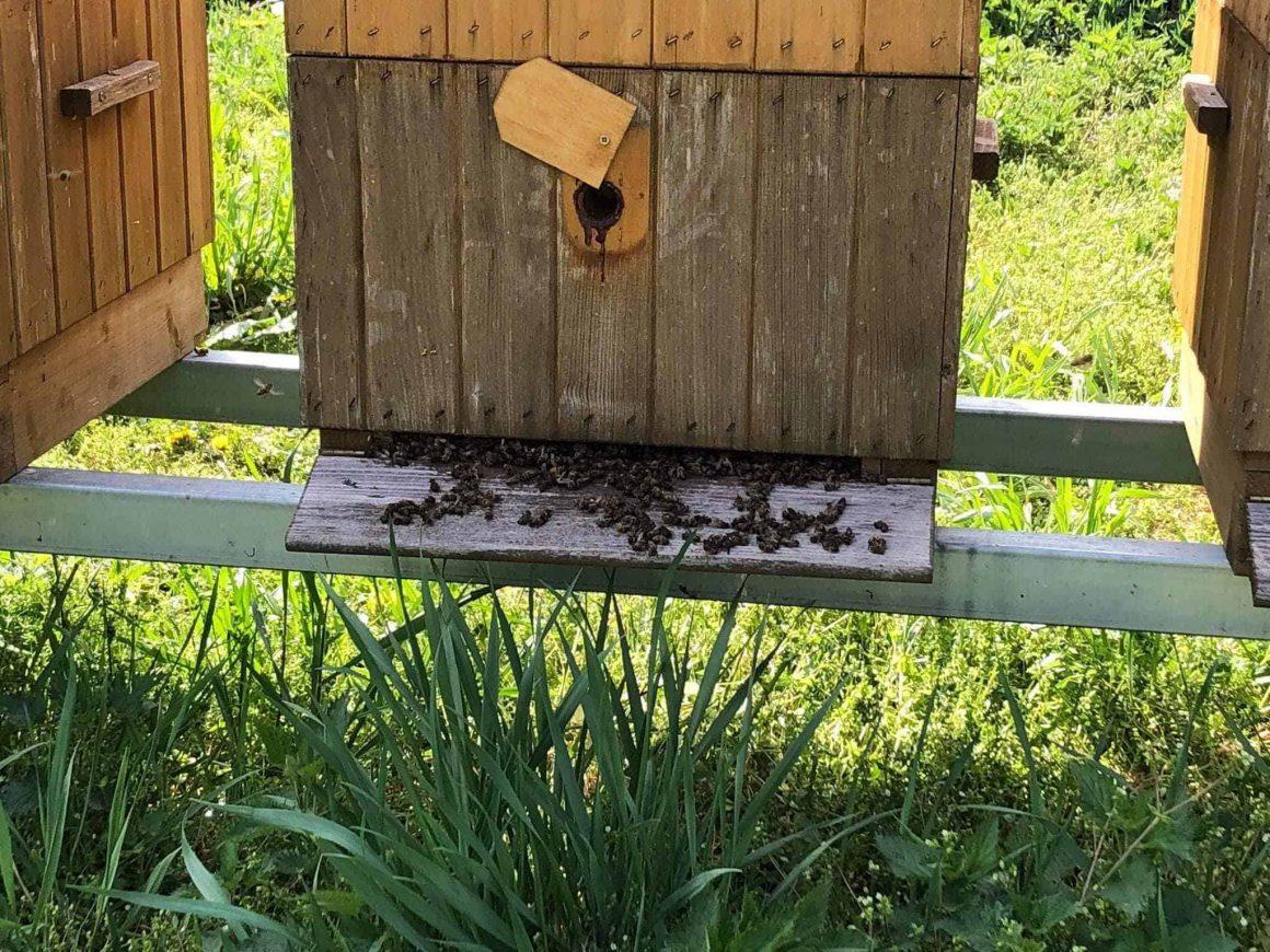 Возле Варшавы были отравлены ульи - 1,5 миллиона пчёл погибли