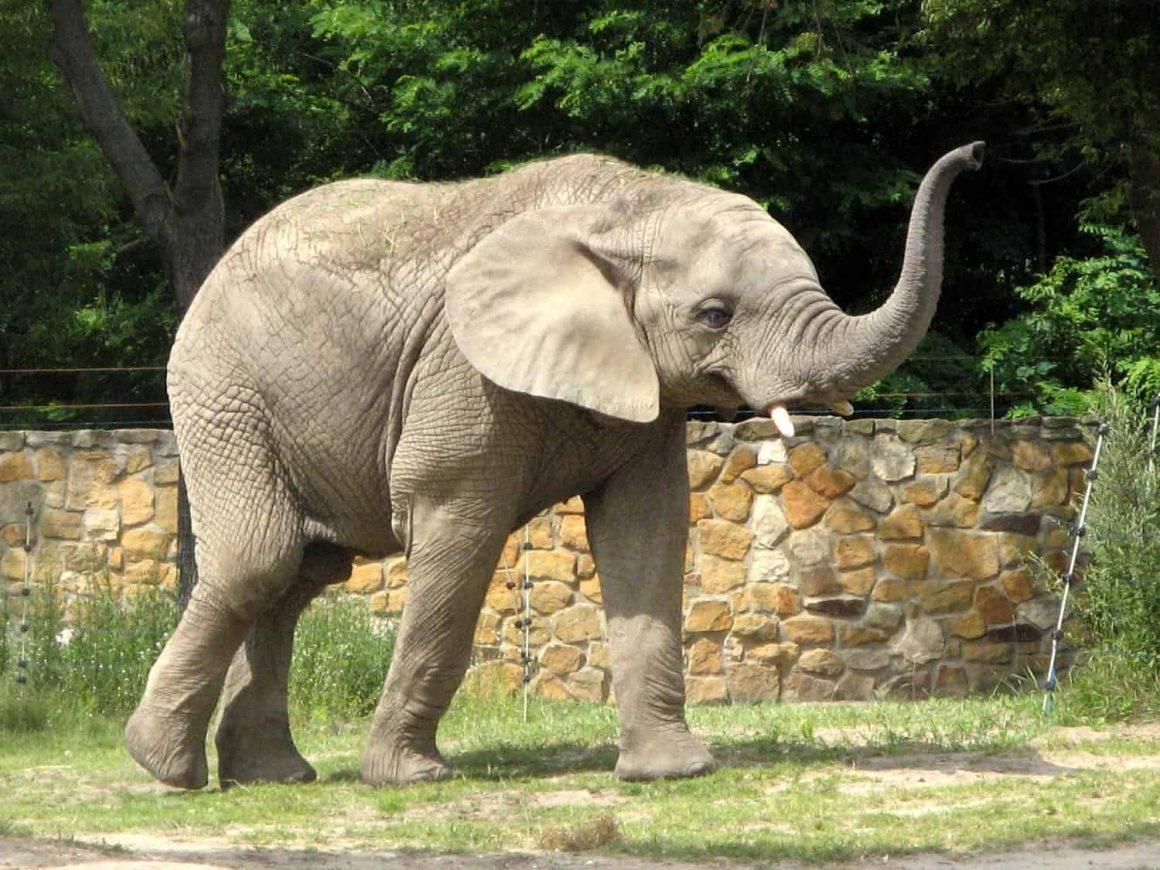 Варшавский зоопарк возобновил свою работу