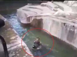 Нападение на медведицу в варшавском зоопарке