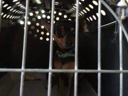 В нагретом и герметично закрытом автомобиле прохожие заметили маленькое изможденное животное. Собака уже была на грани выживания.