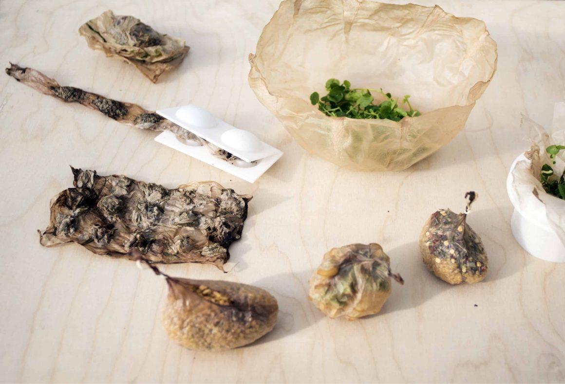 Полька изобрела замену экологичную пластику из чайного гриба