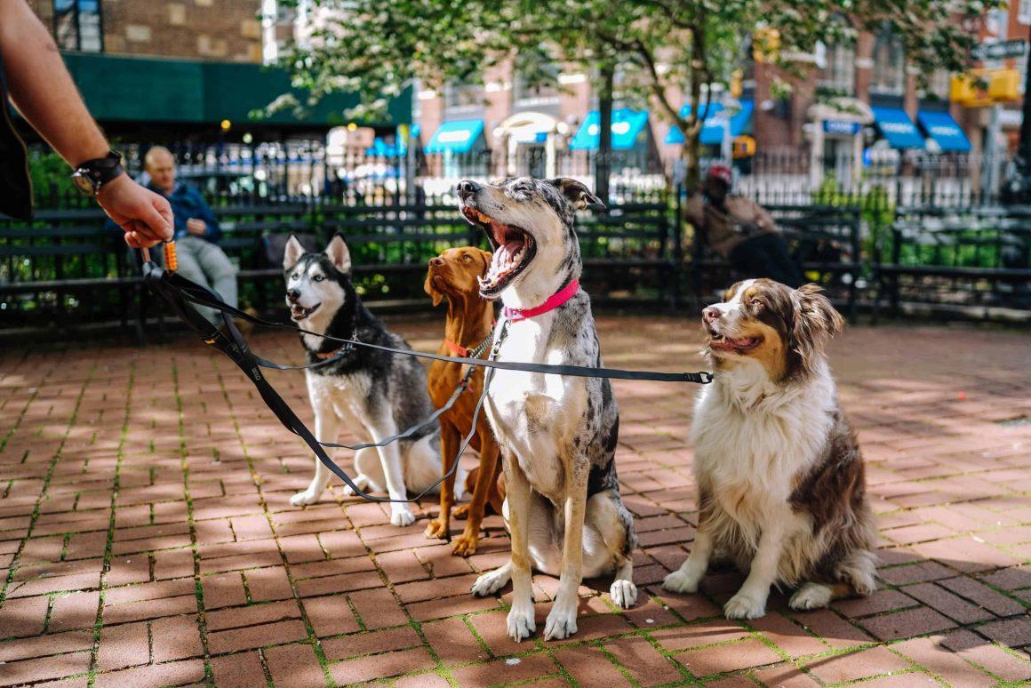 Какие районы лучше всего подходят для жизни с домашними животными? В каких из них есть больше всего зеленых территорий, ветеринарных клиник, зоомагазинов?