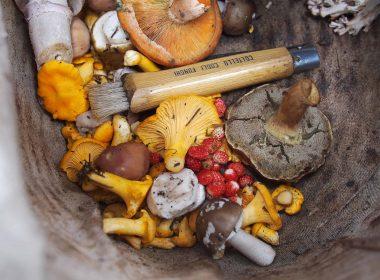Хотите пойти по грибы? Мы расскажем вам, где можно собрать грибное лукошко недалеко от Варшавы.