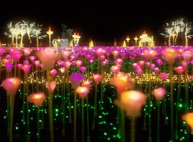 В королевском саду света возобновил работу светящийся розарий