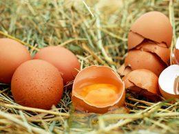 Biedronka в Варшаве прекратит продажу неэтичных яиц с 1 января