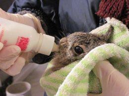 Центр реабилитации диких животных в Варшаве