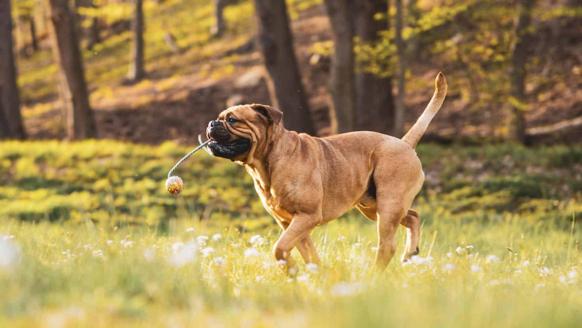 В Польше вводят новые штрафы для владельцев собак