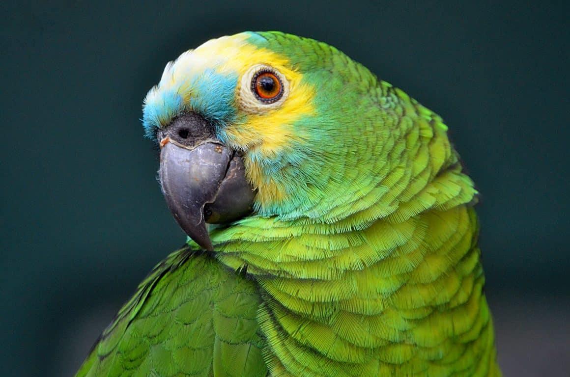вызвали полицию на попугая