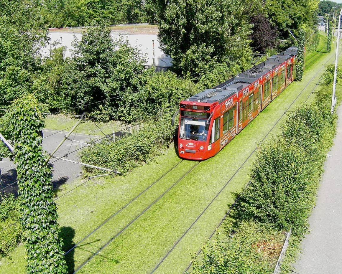В Варшаве появятся трамвайные столбы, увитые растениями – первый такой проект в Польше